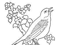Dibujos De Pájaros Para Colorear